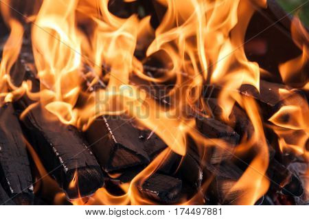 Flames on the wood in a bonfire.