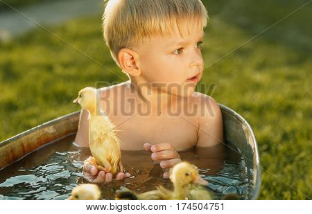 Little cute boy play with duckling on a bright background. Little child with many yellow small ducklings. Boy with ducklings play, swim in the water in summertime.
