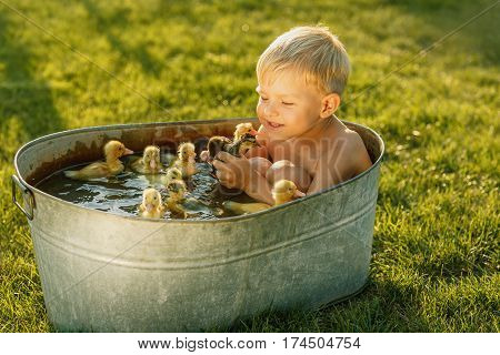 Little cute boy play with duckling in the tub on a bright background. Little child with many yellow small ducklings. Boy with ducklings play, swim in the water in summertime.
