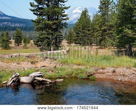 Todd Creek in the forests of Oregon's Cascade Mountains with a field of beautiful trees and grass and the South Sister in the background on a sunny summer day.