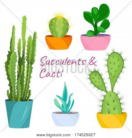 Succulents and cacti vector set on white background. House pot plants. Home interior floral design elements. Evergreen flowers and nature concept. Tropical exotic botany collection.