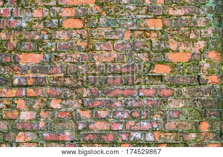 Old Brick Wall Covered With Moss