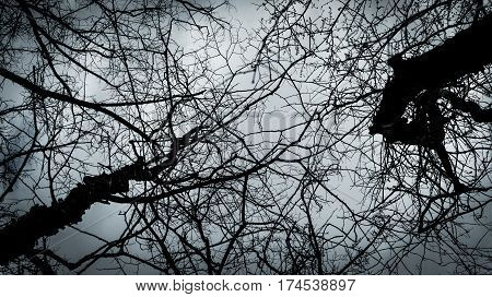Tree Canopy with Bare Limbs facing skyward