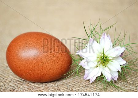 Brown Easter egg and white nigella flower