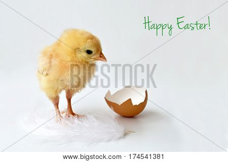 Easter greeting card: Easter chick and eggshell