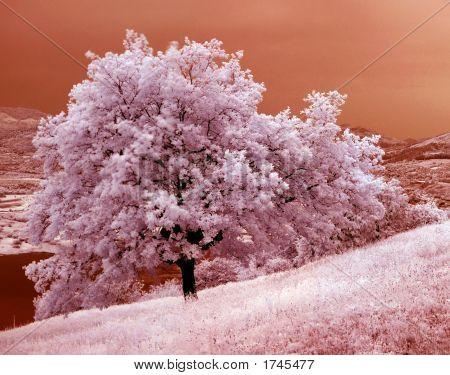 Oak tree landscape in infrared light from Romania Europe EU UE poster