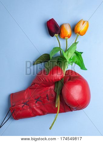 red boxing glove hold gift bucket of flowers isolated on blue background