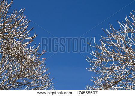bough tree frame on clear blue sky background.