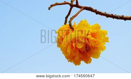 Flower on Pha Chu in Nan province Northern of Thailand