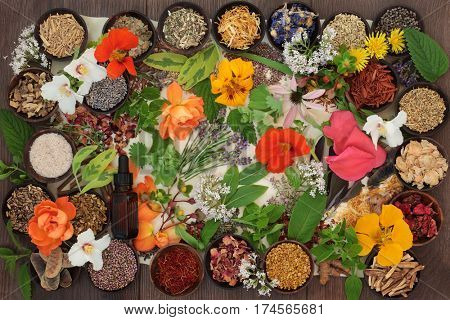Dried medicinal flower and herb selection with essential oil bottle used in natural herbal alternative medicine on parchment paper on oak background.