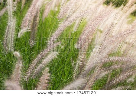 Beautiful Day Of Grass Flower Field stock photo