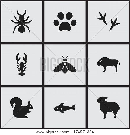 Set Of 9 Editable Zoology Icons. Includes Symbols Such As Crawfish, Bison, Honey And More. Can Be Used For Web, Mobile, UI And Infographic Design.