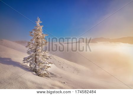 Frozen lonely tree in the morning in Tatra mountain. West Tatra