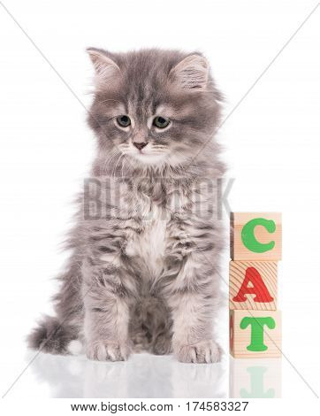 Cute siberian kitten with playing cubes isolated over white background