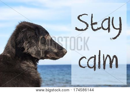 English Text Stay Calm. Flat Coated Retriever Dog Infront Of Ocean. Water In The Background