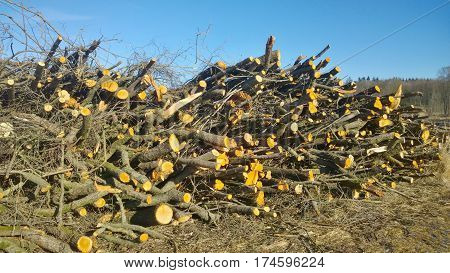 cut fruit tree branches trimmed South Bohemia Czech Republic