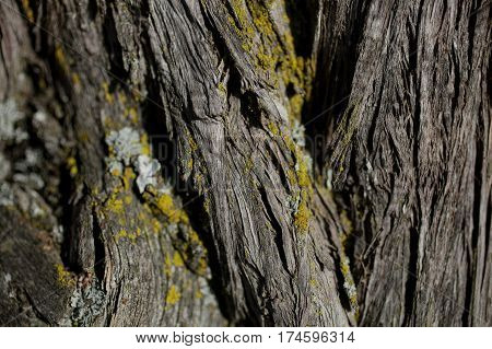Bark tree texture. Bark tree background. Abstract texture and background for designers. Old vintage wood. Wooden pattern. Closeup view of old tree bark.