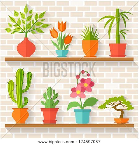 Houseplants and potted flowers on shelves. Greenhouse on the background of brick wall. Vector illustration in flat style.