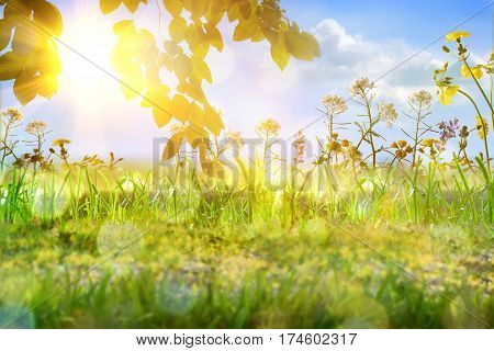 Spring concept with nature background and variety of flowers on the outside with blue sky and sunbeam. Front view. Vertical composition