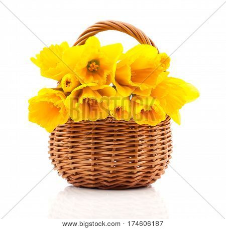 bouquet of narcissus flowers in a basket on a white background