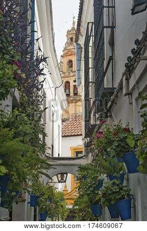 Cordoba (Andalucia Spain): old typical street in the Juderia with potted plants and flowers and the belfry of the cathedral in background