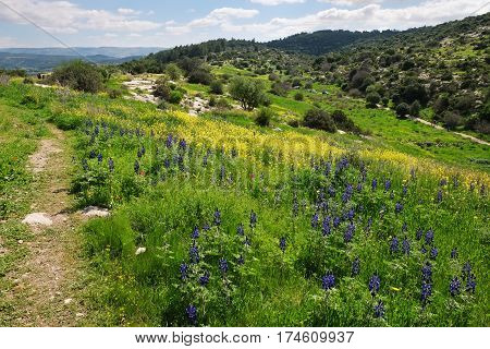 Spring flowering on the hills of Judea in Israel