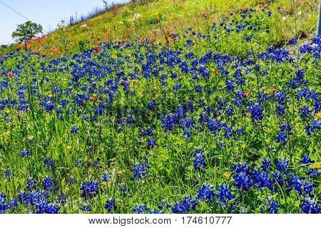 Various Texas Wildflowers