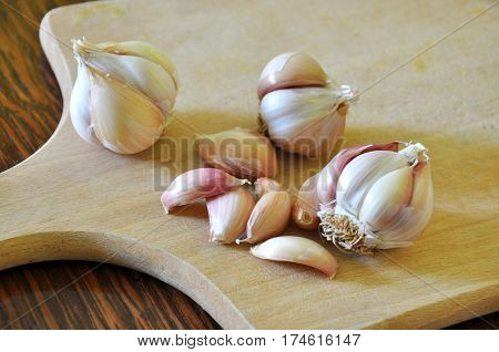 Garlic Cloves and Garlic Bulb on wooden board ready for cutting. Healthiest fresh vegetables