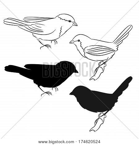 The outline and of the silhouette of the birds Set of four vector illustration