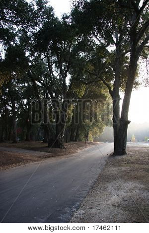 Trees with Filtering Sun