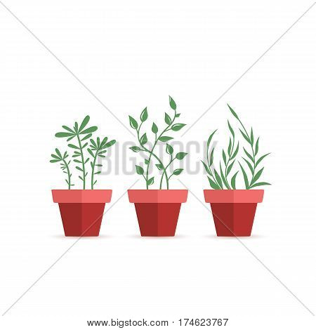 Vector illustration of potted plants, three pot decoration garden plants