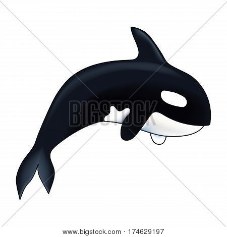 Orca vector illustration. Marine mammal. Killer whale. Isolated on white background