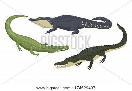 Cartoon green crocodile danger predator and australian wildlife river reptile carnivore alligator with scales teeth flat vector illustration. Tropical africa safari zoo character crocodylus.