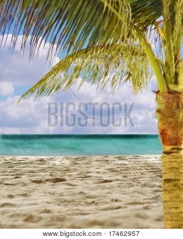 Beach Scene With Palm Tree Fantasy Backdrop background (Insert Your Client!)