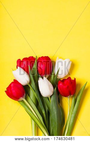 Red and white tulips on yellow background. Concept of spring Women's Day Mother's Day 8 March the holiday greetings. Place for your text