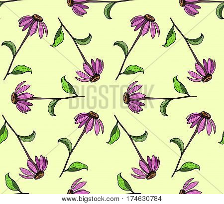 Seamless pattern of color flowers. Color hand drawing flower Echinacea.