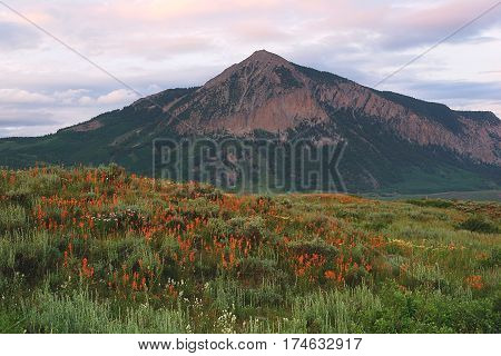 Indian Paint brush and Mt. Crested Butte near Crested Butte CO