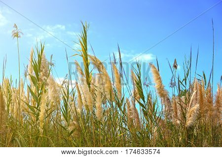 Tall grass on a bog in the summer.