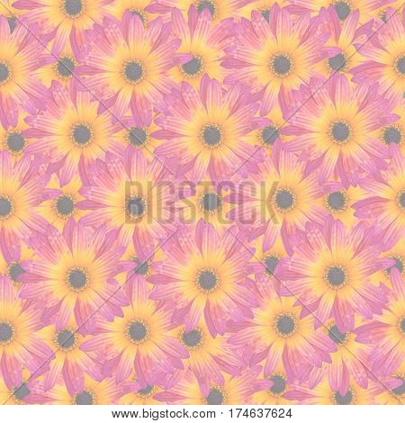 Pattern with Gazania Rigens Rare Sun Flower Bonsai Plant native to Africa. Vibrant magenta and yellow orange flower opacity decreased to create background