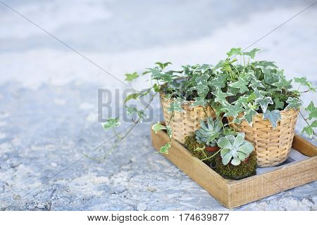 House plants green succulents in a wooden box on a metal countertop home decor retro style
