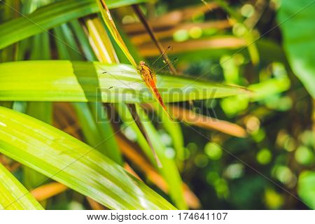 Dragonfly In Tropical Garden On A Green Leaf