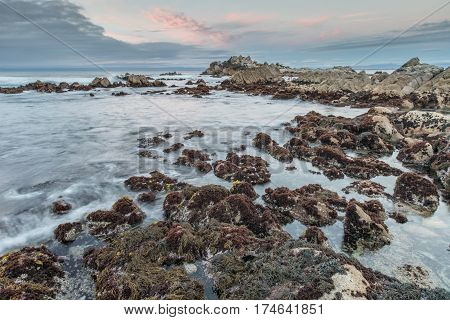Rocky Coast Sunset at Asilomar State Beach. Monterey Peninsula, California, USA.