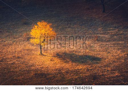 Beautiful lonely yellow tree in a autumn valley. Ukraine Europe