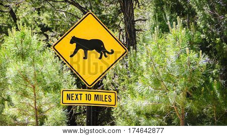 puma sign wild animals crossing next 10 miles usa road sign