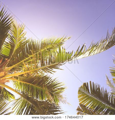 Palm trees against blue sky Palm trees at tropical coast vintage toned and stylized coconut treesummer tree retro