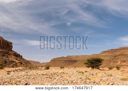 Landscape of the dry river Wadi Draa near Zagora in Morocco with a tree in the the river bed and blue sky with some clouds.