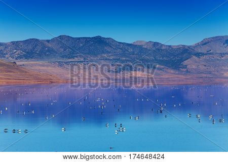 Beautiful landscape picture of Antelope Island and Great Salt Lake with variety of birds swimming on the surface of the water