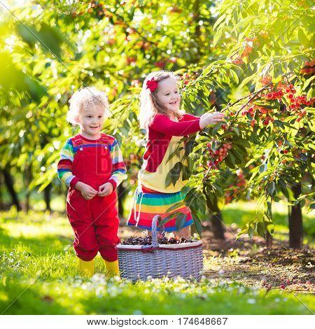 Kids Picking Cherry On A Fruit Farm Garden
