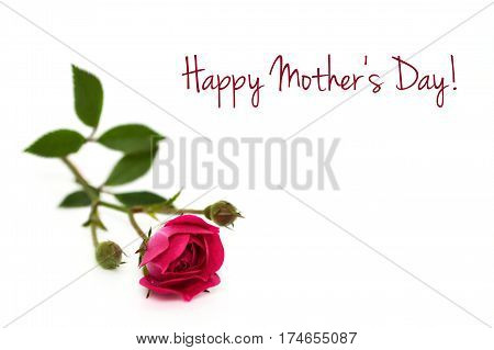 Happy Mothers Day card with red rose isolated on white background