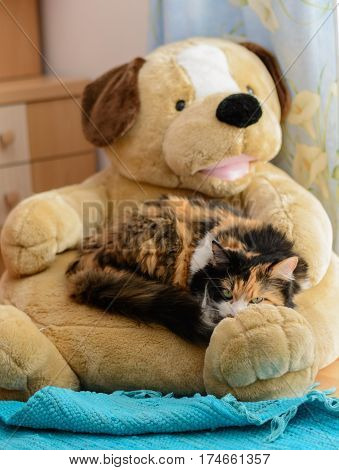 Three-colored cat lying on cuddly dog as sleeping place